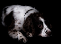 dog photography in surrey