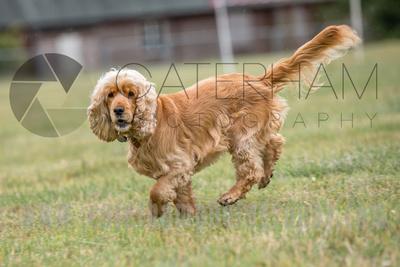 surry photographer- The Caterham Rotary Half Marathon & 10K- dog