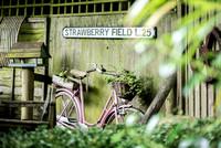 Fanny's Farm Wedding (16)