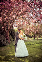 Surrey wedding photographer /Wedding under cherry blossoms/ The wedding couple kiss under the cherry blossoms